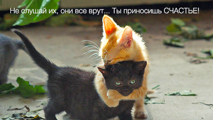 kitten-hug.jpg