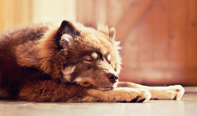 sleepingdog