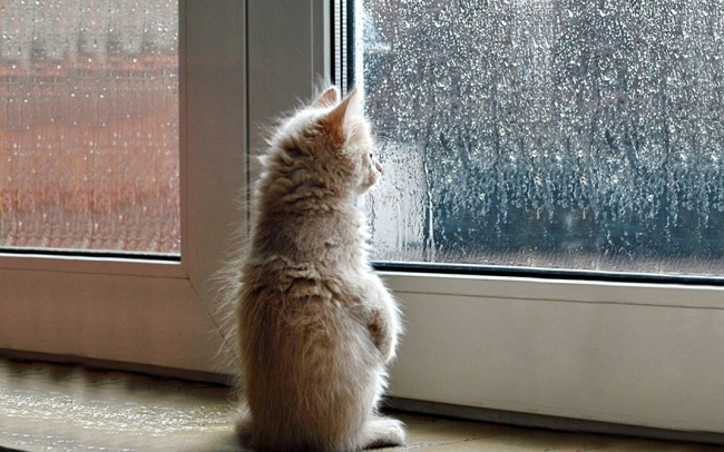 cat-waiting-7