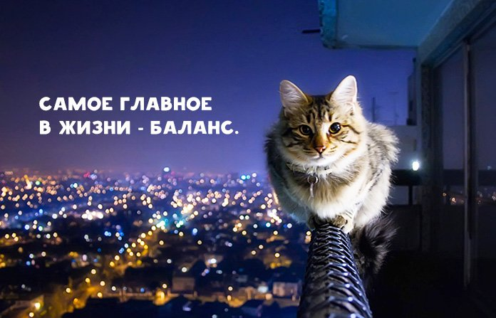 cats balance