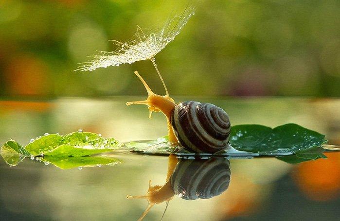 snail-rain
